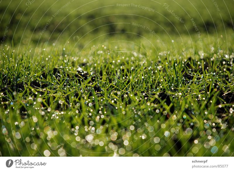 Nature Green Meadow Grass Spring Rain Field Wet Rope Earth Fresh Lawn Grass surface Hill Damp Pasture