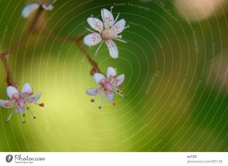 Nature Flower Green Red Summer Blossom Garden Small Pink Point Delicate Work of art Diminutive