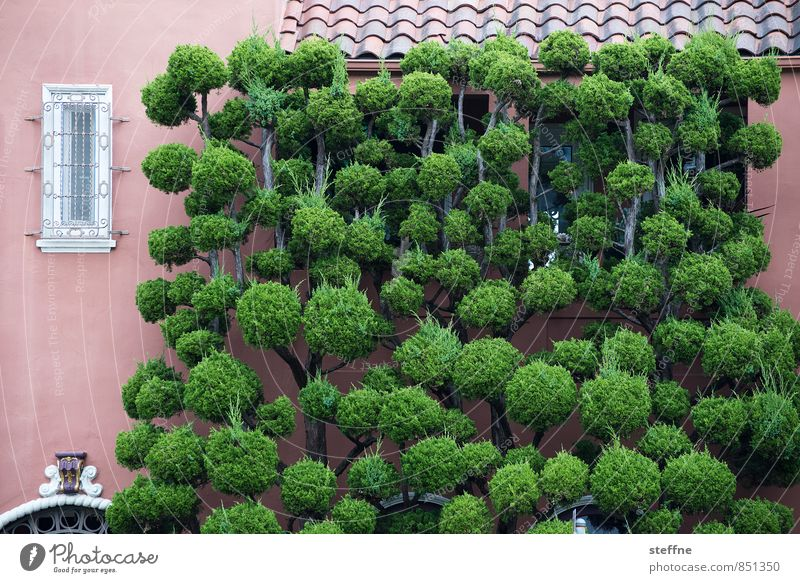 Large plant Plant Tree San Francisco California USA Wall (barrier) Wall (building) Facade Funny Colour photo