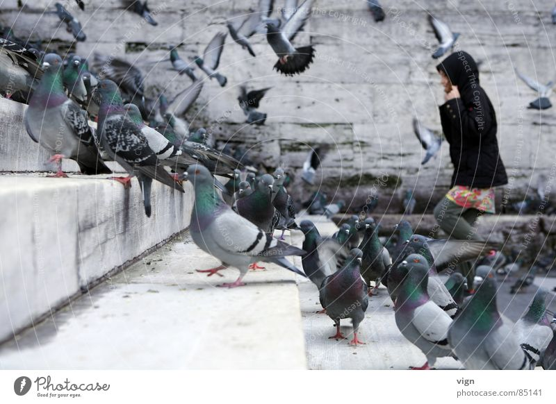 Black Animal Group Wall (barrier) Bird Stairs Multiple Many Pigeon Go up Hooded (clothing) Turkey Istanbul Mosque Enliven