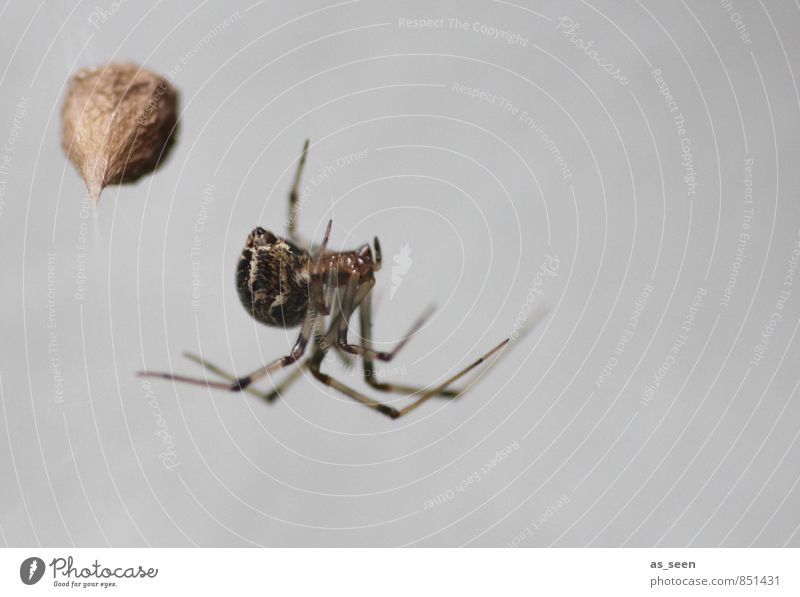 On the lookout Hallowe'en Nature Animal Autumn Spider 1 Net Network Touch Movement Feeding Hang Hunting Aggression Esthetic Authentic Exceptional Threat