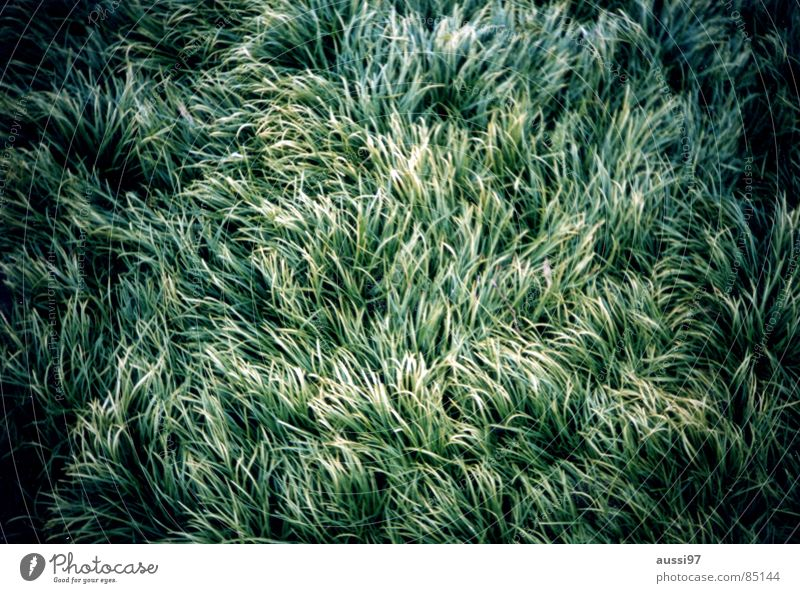 Nature Green Meadow Grass Wind Soft Analog Blade of grass Vignetting Disheveled Sprained