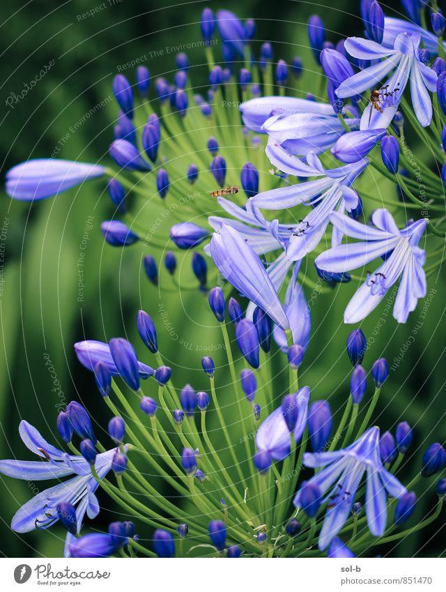 animation Nature Plant Green Summer Flower Garden Wellness Violet Harmonious Senses Wasps