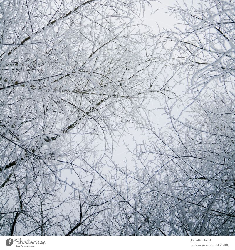 Sky Nature Plant White Tree Landscape Black Winter Forest Cold Environment Snow Wood Bright Air Snowfall
