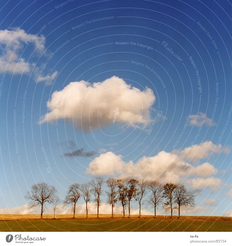 Beautiful Sky Calm Clouds Autumn Together Field Weather Multiple Beautiful weather Avenue Joint residence Clump of trees
