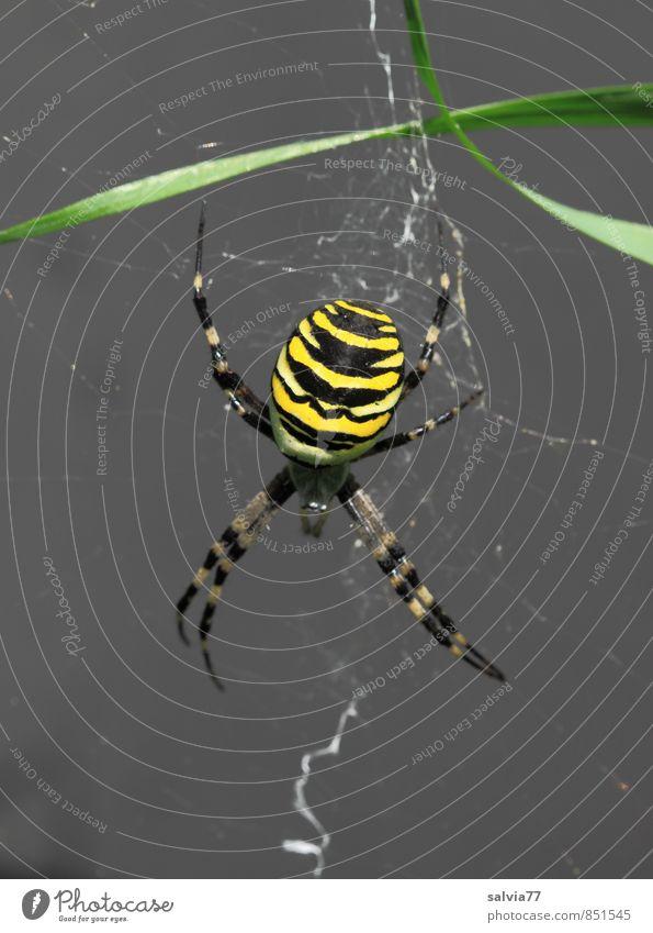 Nature Summer Calm Animal Black Environment Yellow Wild animal Wait Dangerous Esthetic Threat Observe Planning Serene Creepy