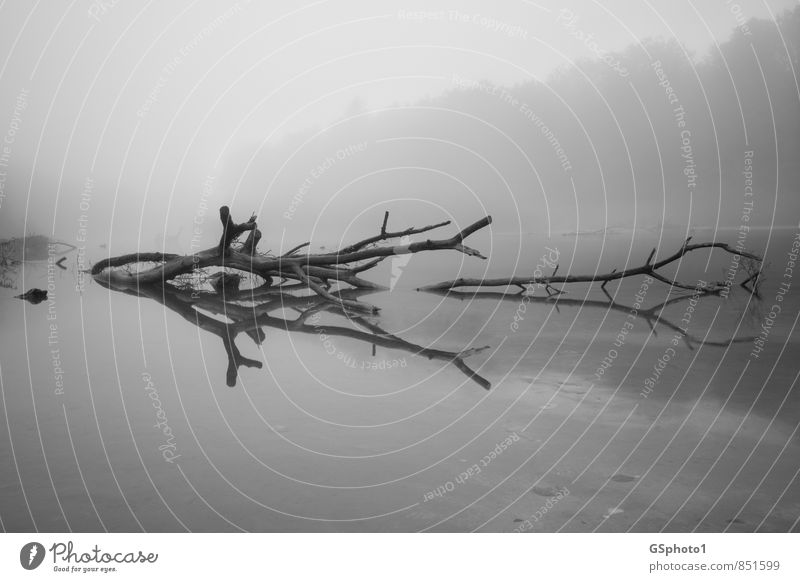Tree reflection in the fog Nature Water Autumn Fog Lakeside River bank Bog Marsh Dark Gray Black White Dream Reflection Pond floodplain Wood Driftwood