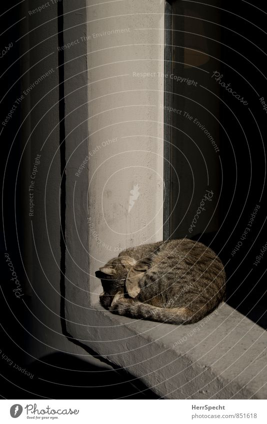 Lights out! Istanbul Window Animal Pet Cat 1 Stone Concrete Lie Sleep Bright Brown Gray Paw Hide Dazzle Evening sun Windowsill Goof off Idle Domestic cat