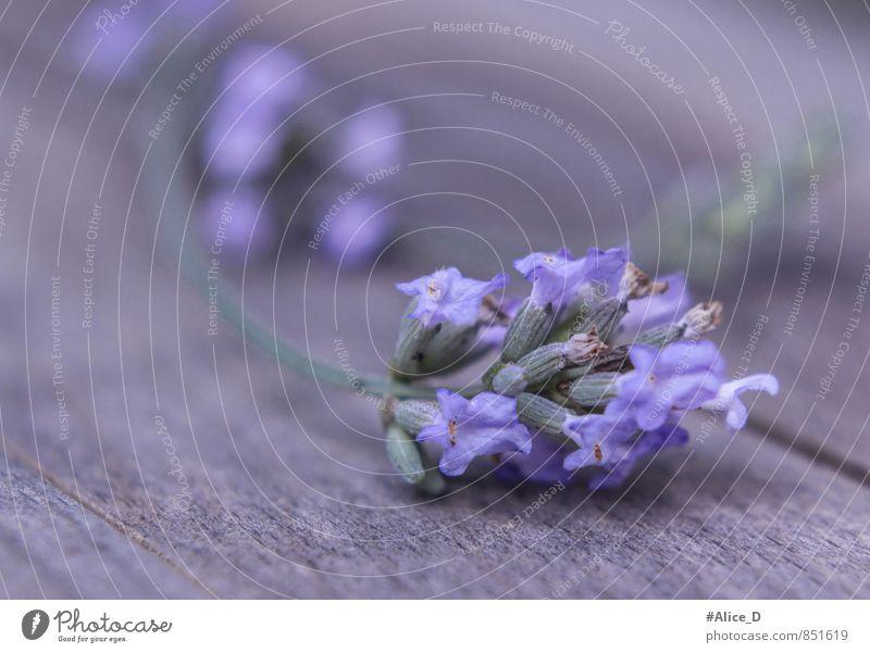 Nature Blue Plant Beautiful Flower Healthy Eating Uniqueness Violet Fragrance Foliage plant Alternative medicine Agricultural crop Wild plant