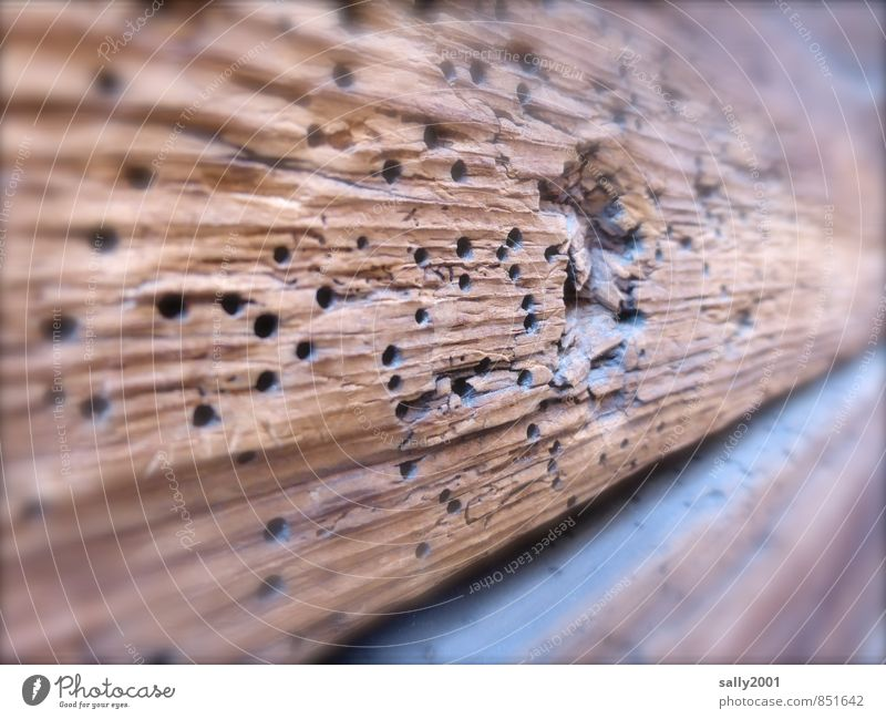 The worm inside... Wall (barrier) Wall (building) woodworm Wormhole Old Broken Dry Brown Nostalgia Decline Transience Destruction Wooden board Hollow Perforated