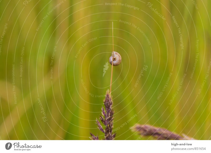 free climbing Nature Animal Summer Beautiful weather Warmth Grass Wild plant Meadow Snail 1 Soft Brown Yellow Green Adventure Esthetic Loneliness Colour photo