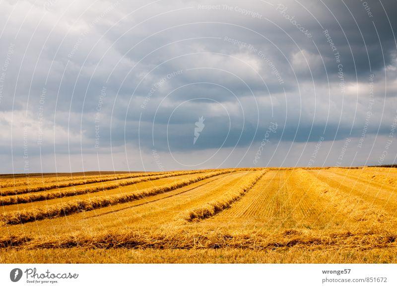 Sky Summer Landscape Clouds Dark Yellow Gray Horizon Weather Field Gold Threat Grain Harvest Storm Thunder and lightning