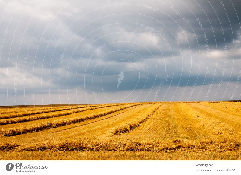 Winding weather Landscape Sky Clouds Storm clouds Horizon Summer Weather Bad weather Thunder and lightning Agricultural crop Grain Grain field Field Threat Dark