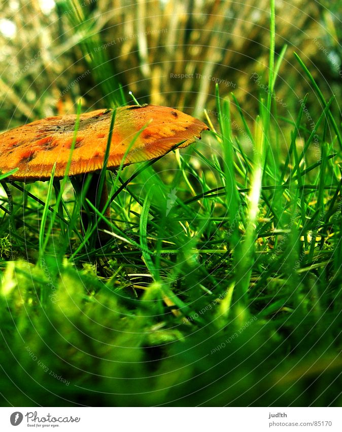 mushroom mushroom! Blade of grass Grass Green Spring Meadow Brown Autumn Vegetable Mushroom Plant Nature Lawn Garden