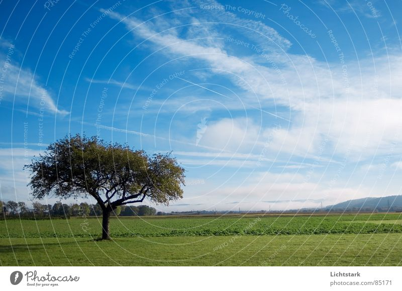 morning dew Sky Tree structure Field Agriculture Calm Fog Comfortable Tree trunk Canopy (sky) green Blue Rope