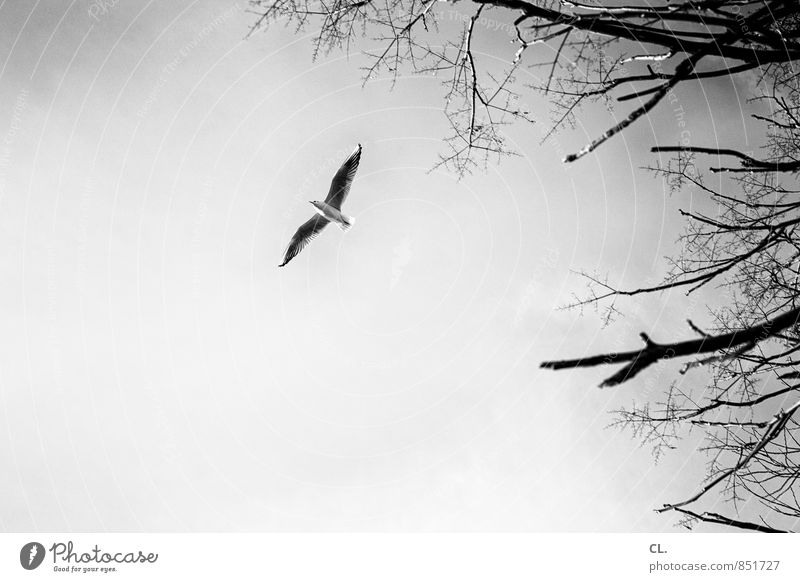 Sky Nature Tree Landscape Animal Environment Freedom Flying Bird Free Climate Wing Future Branch Infinity Target