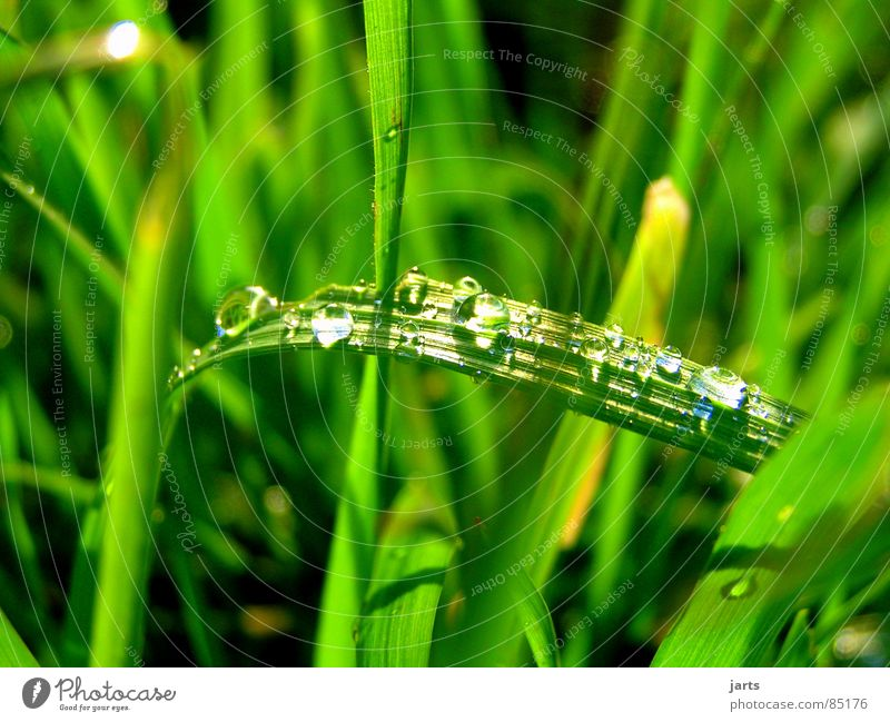 Water Green Meadow Grass Rain Drops of water Wet Damp Pasture Blade of grass