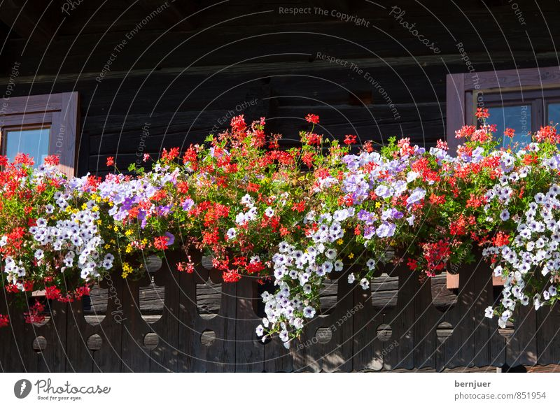 Flowers in front of the hut House (Residential Structure) Hut Beautiful Cliche Brown Red White Balcony Bavaria flower decoration Window box Petunia Geranium