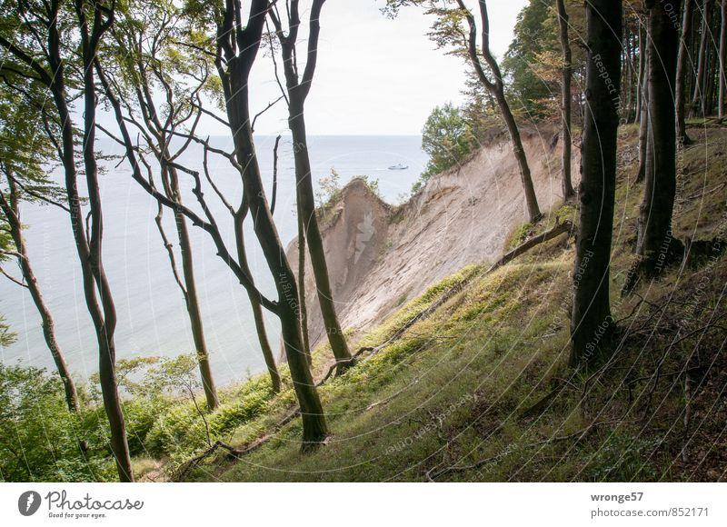 Nature Vacation & Travel Blue Plant Green Summer Tree Landscape Far-off places Forest Grass Coast Brown Horizon Baltic Sea Rügen