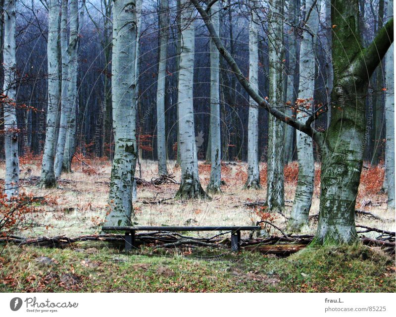 Winter Calm Leaf Loneliness Forest Dark Grass Hiking Bench To go for a walk Leisure and hobbies Americas Tree trunk Beech tree Edge of the forest