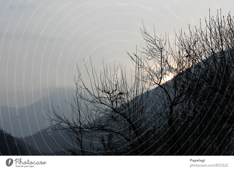 morning mood Nature Sunrise Sunset Spring Beautiful weather Fog Tree Alps Mountain Far-off places Infinity Moody Joie de vivre (Vitality) Spring fever Calm