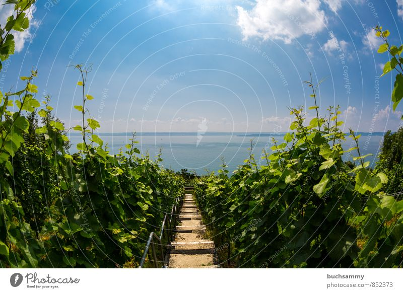 View of Lake Constance from Meersburg Fruit Wine Vacation & Travel Tourism Trip Summer Summer vacation Sun Nature Landscape Water Sky Clouds Horizon Sunlight