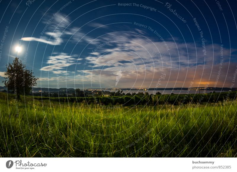 Lake Constance in moonlight Vacation & Travel Tourism Trip City trip Summer Summer vacation Nature Landscape Water Clouds Moon Beautiful weather Tree Grass