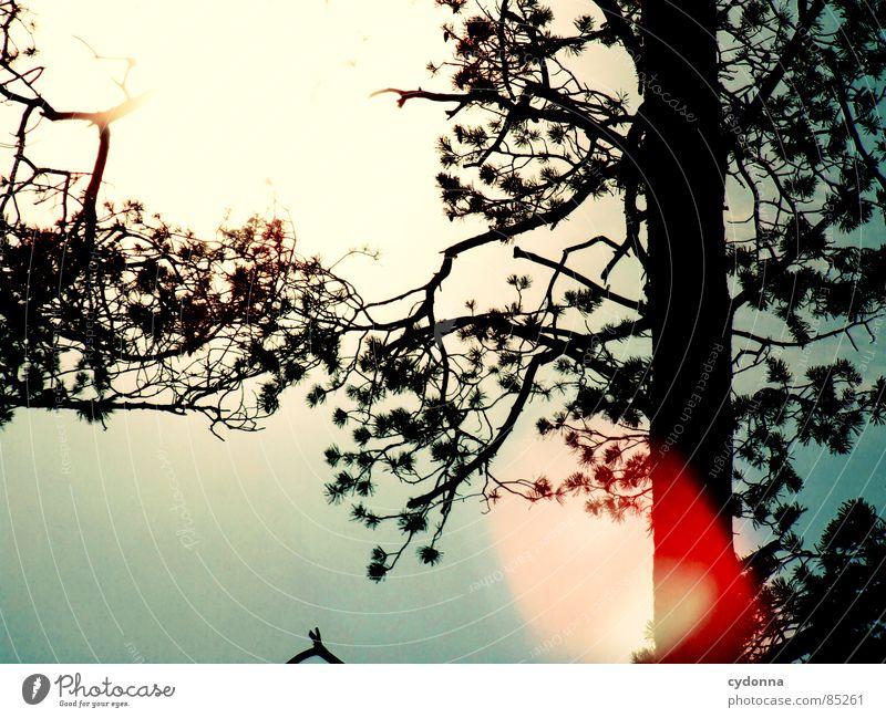Sky Nature Beautiful Sun Red Joy Warmth Life Spring Emotions Lighting Branch Beautiful weather Tree trunk Twig Radiation