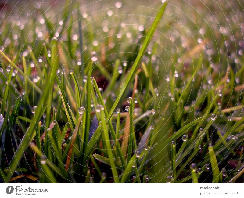 I WAKE UP AT 6 A.M. Glittering Dew Grass Meadow Green Wet Damp Romance Nature Playing Fairy tale Fairytale landscape Daydream Dream Jinxed Beautiful Idyll