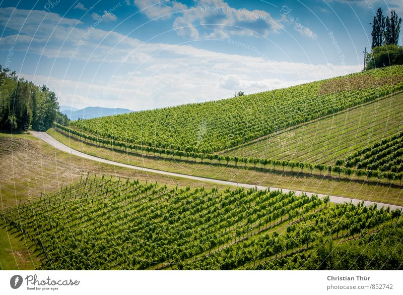 Wine Route (Southern Styria) Wellness Harmonious Senses Relaxation Calm Meditation Vacation & Travel Trip Summer vacation Hiking Cycling Nature Sky Clouds Sun