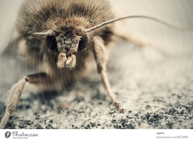 first contact Hair Animal Wild animal Pelt Butterfly Moth Feeler 1 Observe Threat Creepy Nature Colour photo Subdued colour Exterior shot Close-up Detail