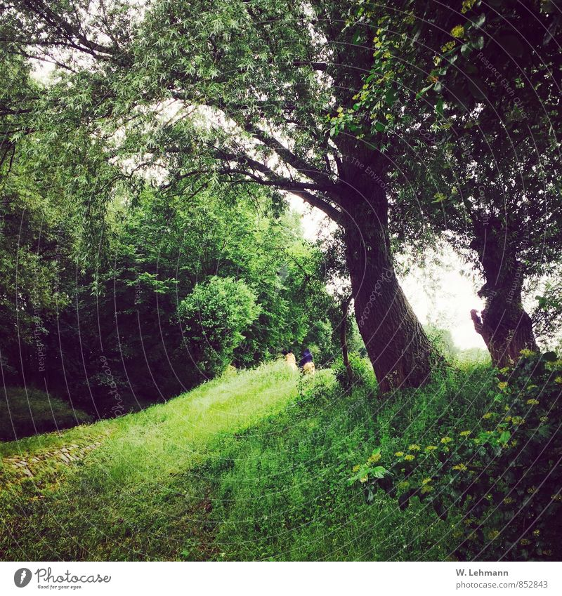 Human being Nature Plant Green Tree Landscape Forest Meadow Grass Earth Bad weather