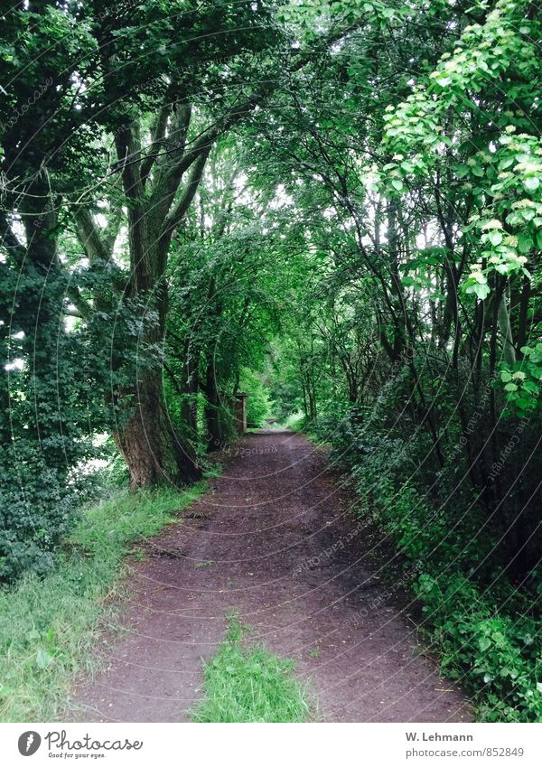 forest path Environment Nature Plant Bad weather Tree Forest Old Green Colour photo Exterior shot Deserted Day Blur