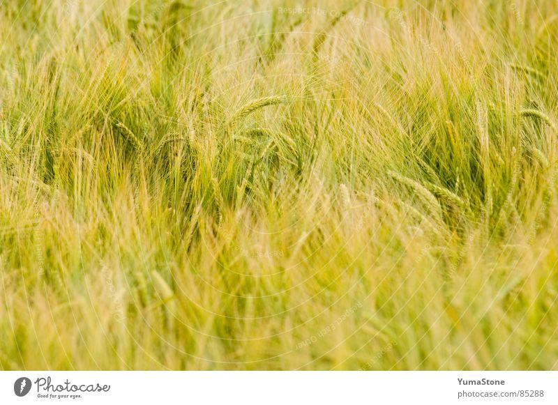 Nature Summer Nutrition Grass Wind Grain Agriculture Harvest