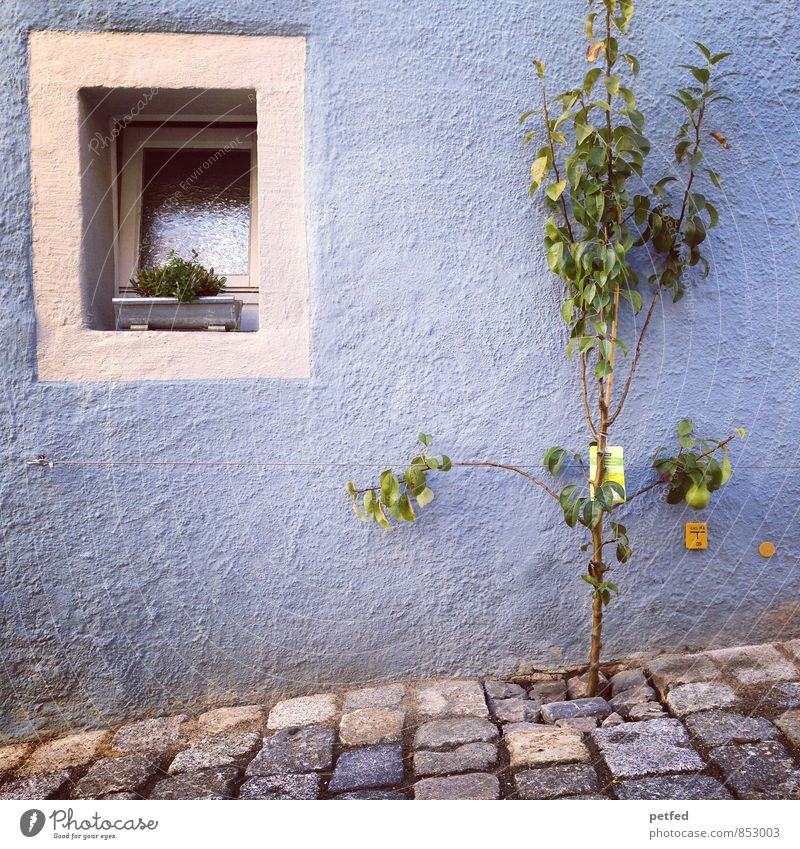 Blue Plant Green White Summer Tree House (Residential Structure) Environment Window Wall (building) Wall (barrier) Gray Stone Facade Growth Living or residing