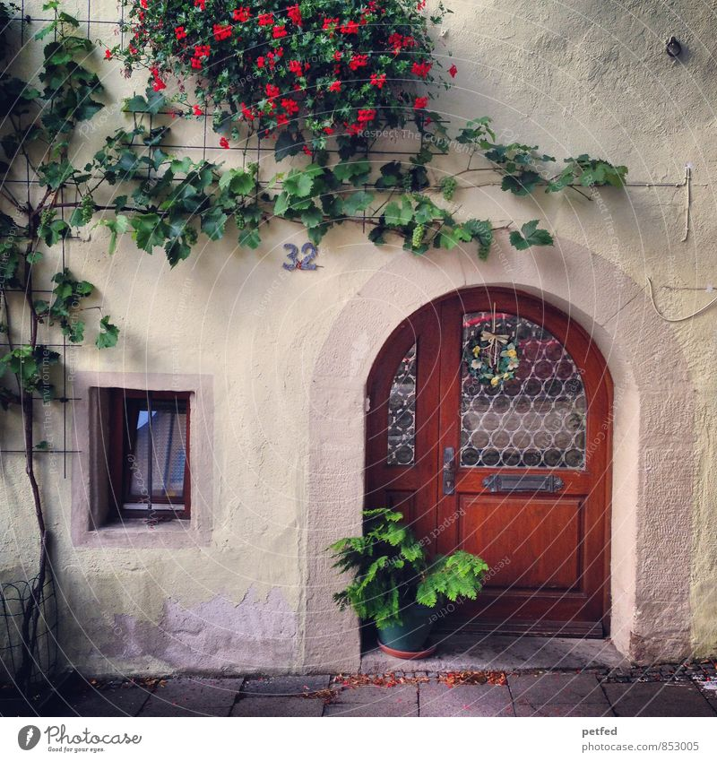 Domestic Views VII Plant Ivy Blossom Foliage plant House (Residential Structure) Wall (barrier) Wall (building) Facade Window Door Stone Wood Glass Cute Brown
