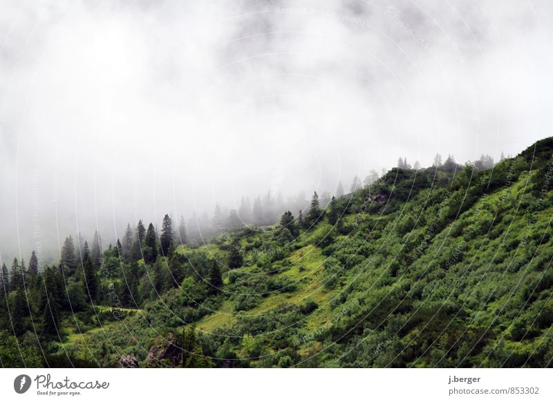Nature Plant Green White Summer Landscape Clouds Forest Mountain Air Rain Fog Hiking Wet Adventure Hill