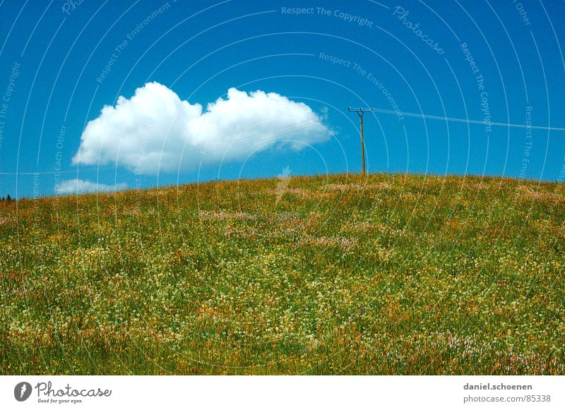 the cloud Spring Summer Dandelion Blossom Flower Flower meadow Leisure and hobbies Background picture Yellow Green Light blue Beautiful Abstract Sunbathing