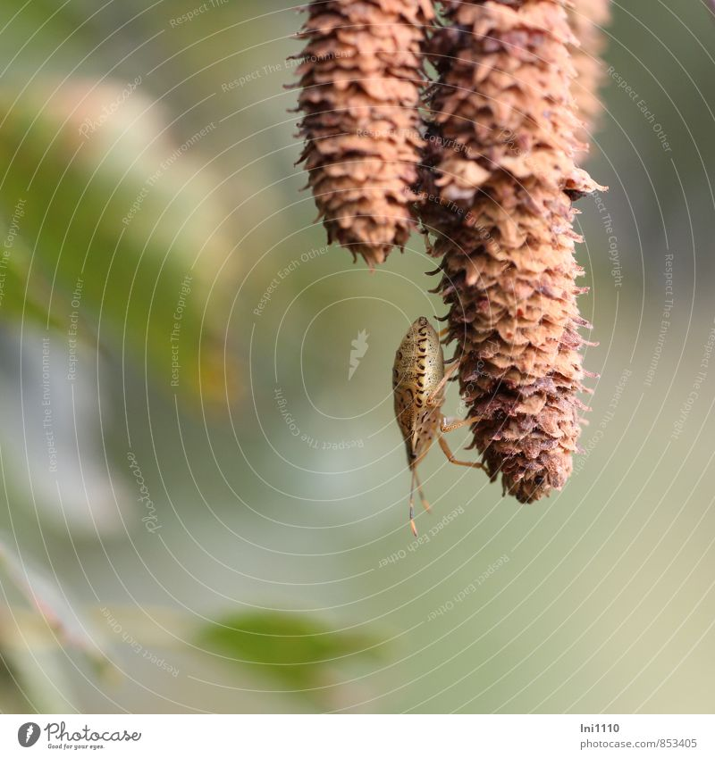 bug Plant Animal Wild plant Birch tree Garden Park Field Forest Wild animal Bug 1 Observe Discover Hang Exceptional Thin Fantastic Beautiful Small Long Astute