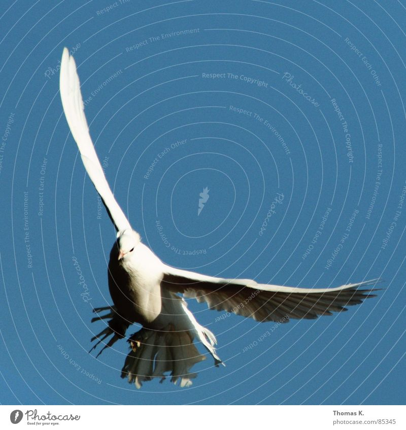 White Beautiful Eyes Gray Bird Flying Dirty Aviation Feather Observe Peace Pigeon Beak Judder Animal Poultry