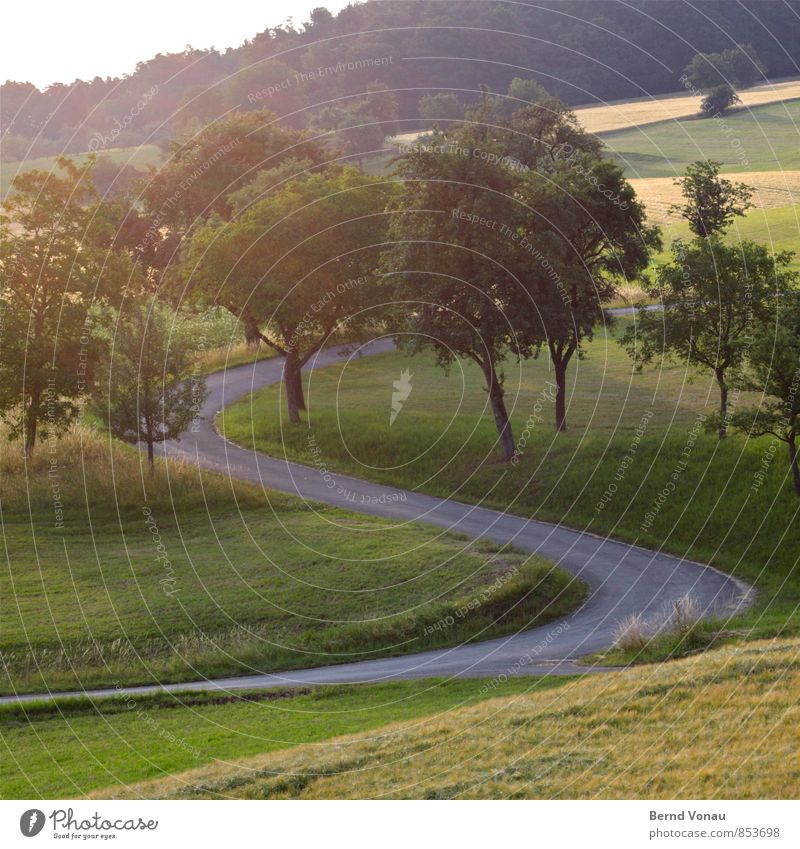 S Environment Landscape Plant Tree Grass Meadow Field Forest Yellow Gray Green Asphalt Curve Street Curved Spirited Sunlight Upward Hill Summer Beautiful