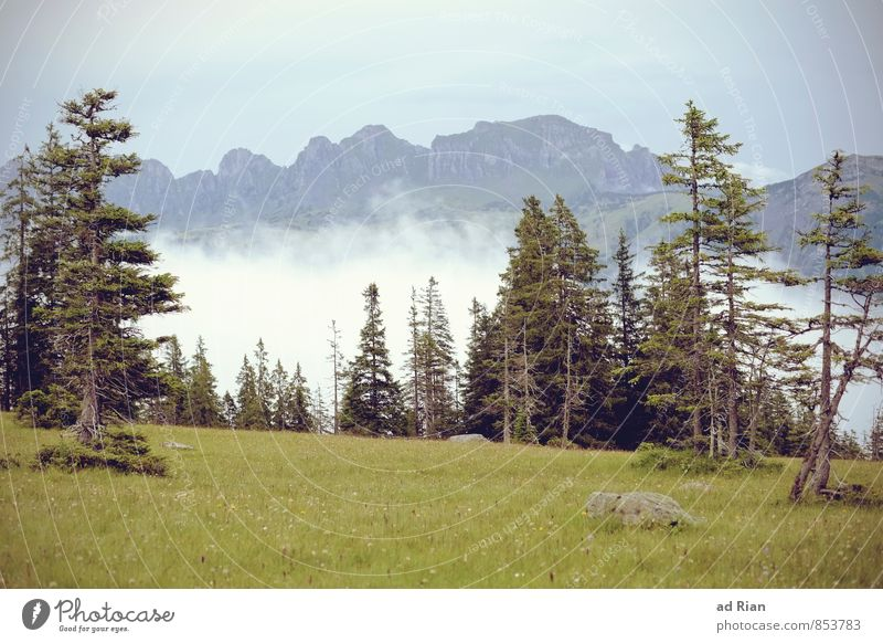 Sky Nature Vacation & Travel Summer Tree Landscape Clouds Forest Mountain Grass Natural Rock Horizon Rain Wild Fog