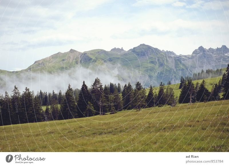 Nature Vacation & Travel Plant Summer Tree Landscape Clouds Animal Far-off places Forest Mountain Grass Freedom Rock Fog Hiking