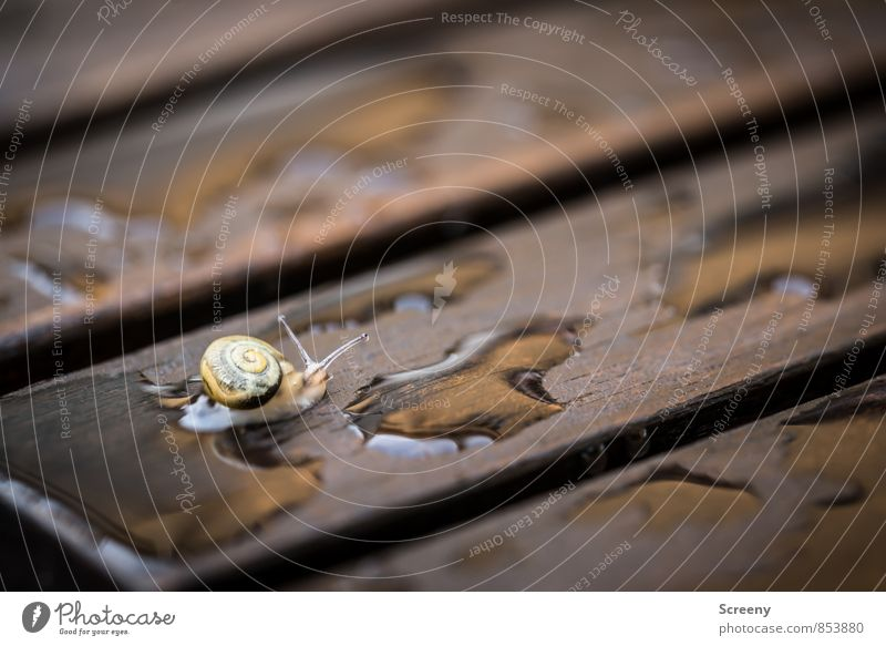 On dry paths... Nature Animal Water Spring Summer Bad weather Rain Snail 1 Baby animal Wood Small Wet Brown Yellow Safety (feeling of) Serene Slowly Crawl
