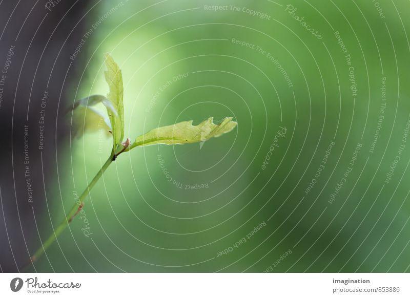 fresh instinct Nature Animal Spring Plant Tree Leaf Foliage plant Growth Germ Colour photo Exterior shot Close-up Detail Macro (Extreme close-up)