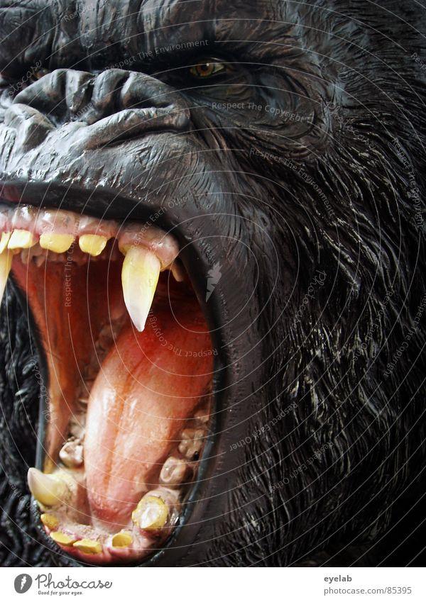 Black Eyes Hair and hairstyles Fear Nose Dangerous Threat Pelt Set of teeth Africa Stage play Zoo Virgin forest Cinema Pet Mammal