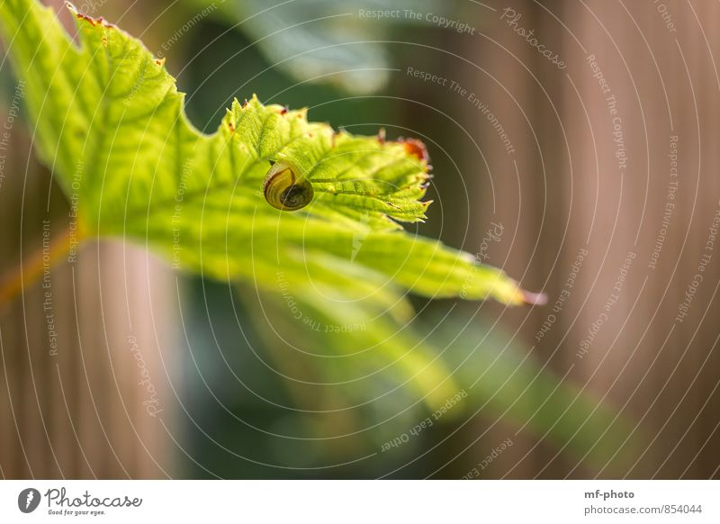 snail shell Nature Summer Plant Leaf Snail Brown Green Colour photo Exterior shot Deserted Morning