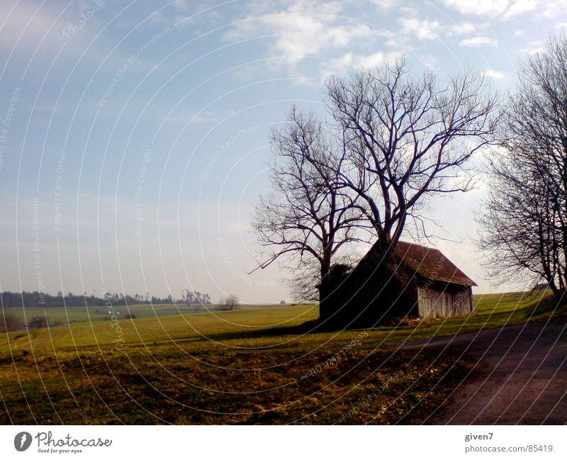 Landscape Field Perspective Romance Snowscape Blue sky Black Forest