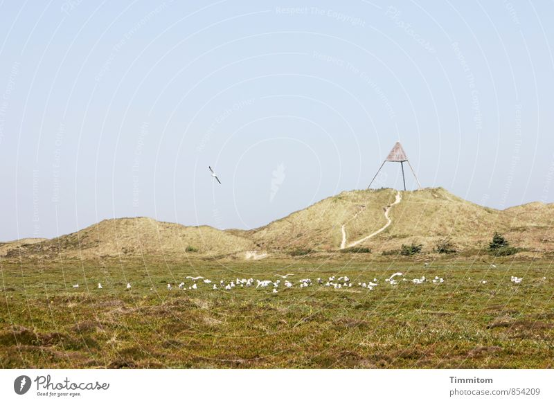 airfield Vacation & Travel Environment Nature Landscape Plant Animal Sky only Summer Beautiful weather Dune Denmark Navigation mark Seagull Group of animals