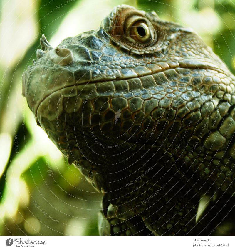 Green Animal Grass Nose Image Zoo Antlers Odor Barn Muzzle Reptiles Spine Death's head Saurians Mollusk Nostril